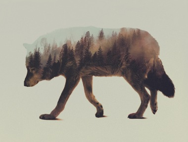 Double-Exposure-Animal-Portraits-by-Andreas-Lie-3